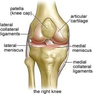 Image result for melanie ryding acl