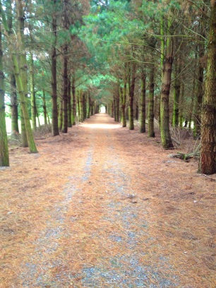 round the mountains cycle trail